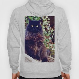 The King of cats Pomponio Mela Hoody