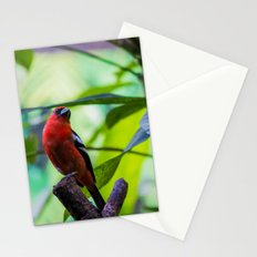 Sephanoides Fernandensis Stationery Cards
