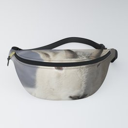 White Rocky Mountain Goat. Fanny Pack