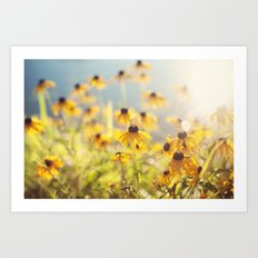 summer susans Art Print
