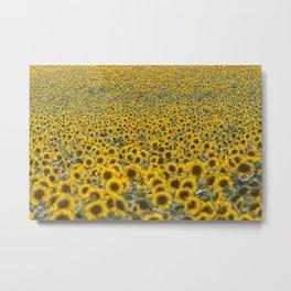 Sea of Sunflowers Metal Print