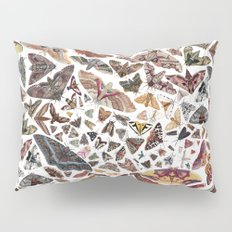 Moths of North Ameica Pattern Pillow Sham