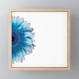 colored summer ~ blue gerbera Framed Mini Art Print