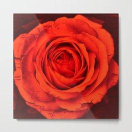 Vintage Rose,red Metal Print