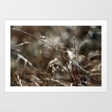 Pure Morning IV Art Print
