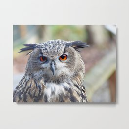 Eurasian Eagle-Owl, Uhu Metal Print