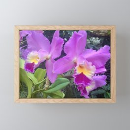 Purple and yellow orchids Framed Mini Art Print