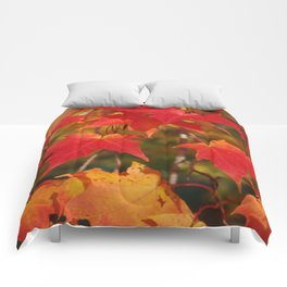 Fiery Autumn Maple Leaves 4966 Comforters