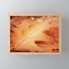 AFE Autumn Leaves, Nature Photography Framed Mini Art Print