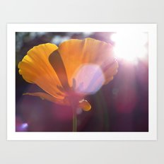 Sunlit Flower Art Print