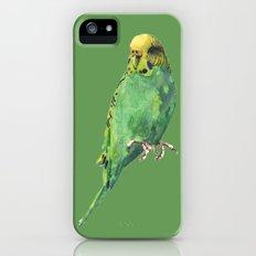 Budgie, parakeet, budgerigar,bird art, budgie painting Slim Case iPhone (5, 5s)