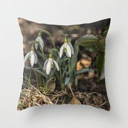 Snowdrops under a holly bush Throw Pillow