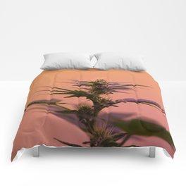 Macro cannabis kush photo Comforters