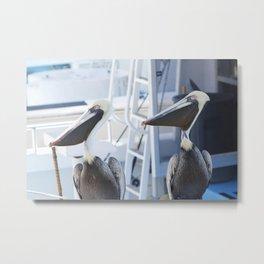 Pelicans. Metal Print