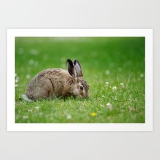 Lepus europaeus young hare Art Print