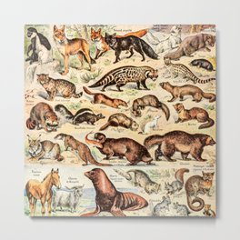 Cute Animals // Fourrures by Adolphe Millot XL 19th Century Science Textbook Diagram Artwork Metal Print