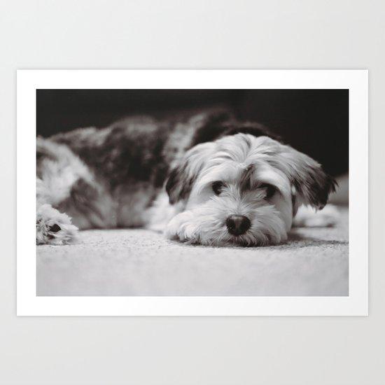 Lazy Dog Days Art Print
