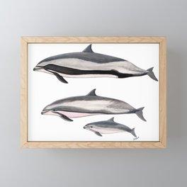Fraser´s dolphin Framed Mini Art Print