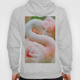 Mad Flamingo (Color) Hoody