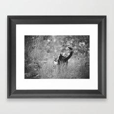 Cats kissing Framed Art Print