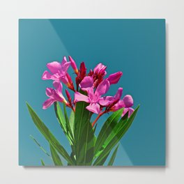 Pretty in pink under turquoise sky Metal Print