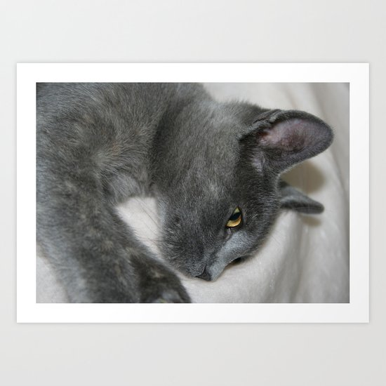 Close Up Portrait Of A Relaxed Grey Cat  Art Print