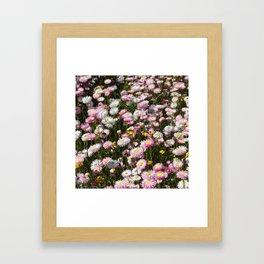 Flowers Everywhere!  Framed Art Print