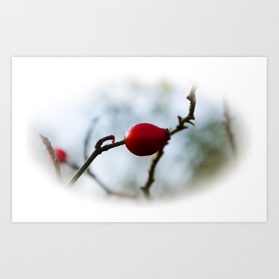 rose hip Art Print