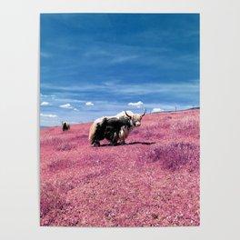 Pink Yack Poster