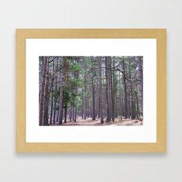 Hidden Trails Framed Art Print