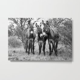 Three Wild Donkeys in the Desert Metal Print