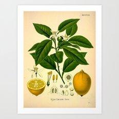 Botanical Print: Lemon Tree Art Print