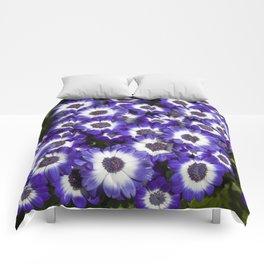 Cineraria Purple Comforters