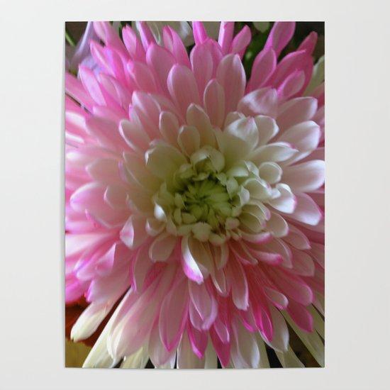 Chrysanthemum by goldenviews