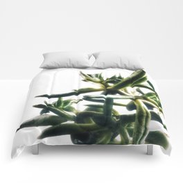 Jade - money plant - succulent in bright light Comforters