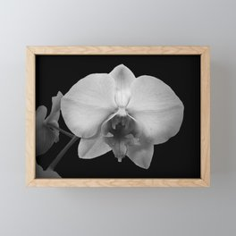Contemporary Black and White Orchid Flower Floral Art A576 Framed Mini Art Print