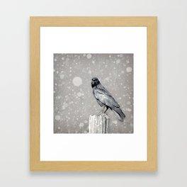The Stately Raven Framed Art Print