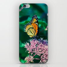 Viceroy Butterfly iPhone & iPod Skin