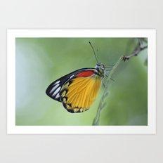 Butterfly.. Art Print