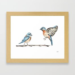 Bluebirds watercolour and ink Framed Art Print