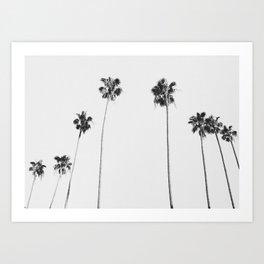 Black & White Palms Art Print