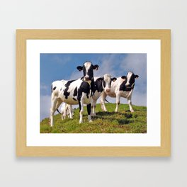 Young Holstein cows Framed Art Print