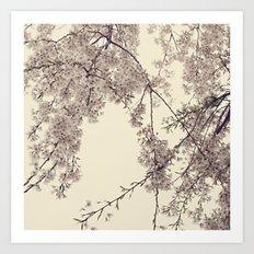 Raintree Lavender pink tree blossoms Art Print