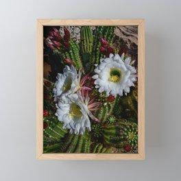 White Argentine_Giant_Cacti in Bloom Framed Mini Art Print