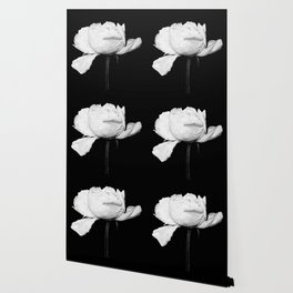 White Peony Black Background Wallpaper