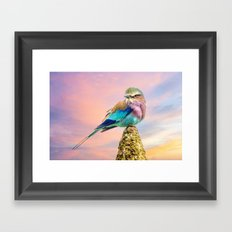 Lilac breasted roller at sunset Framed Art Print