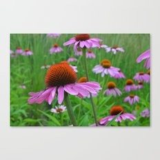 Pink Coneflowers Canvas Print