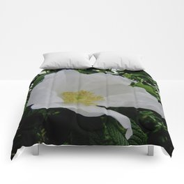 Wild White Rose in Full Bloom Comforters