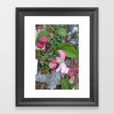 Spring Apple Blossoms Framed Art Print
