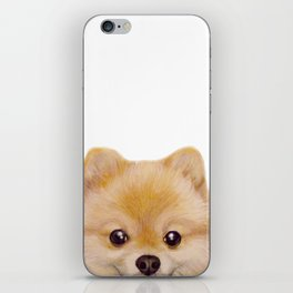 Pomeranian Dog illustration original painting print iPhone Skin